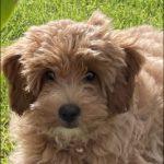 Profile picture of Winnie Davies