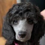 Profile picture of Leia Harris